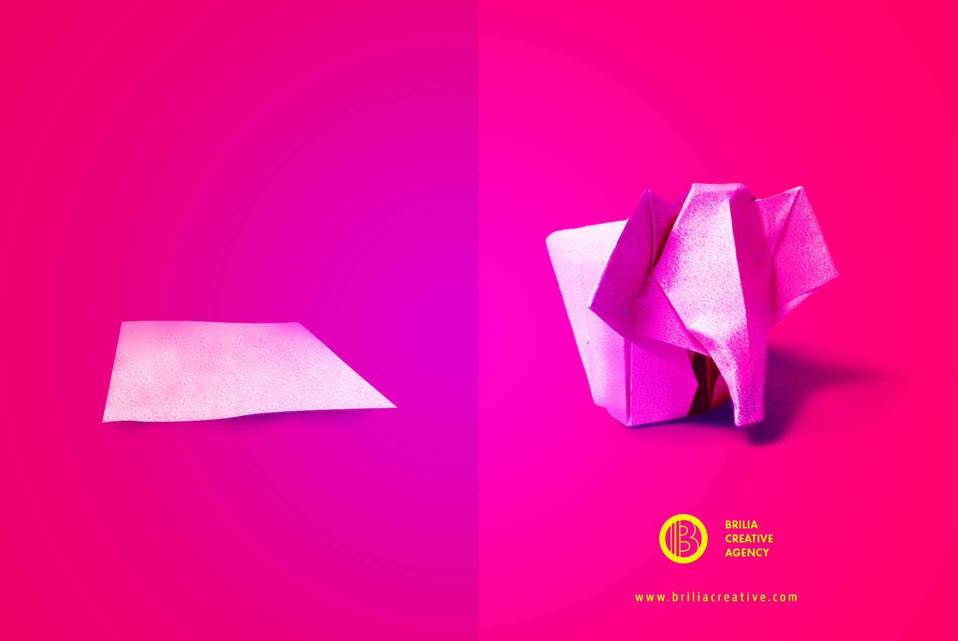 brilia-brand-paper-elephant